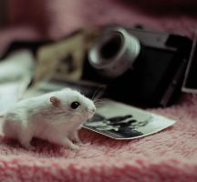 VINTAGE Hamster I by CassiesCrue