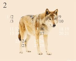 Wolf Calendar February 2013 by resresres