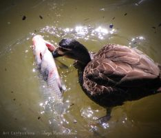 Scavenger Duck 2 by TanyaMarieReeves