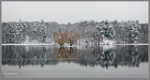 January pond by Mogrianne