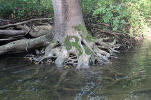 Yay a picture of a swamp tree. by BohemianDragon