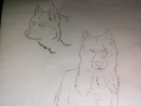 Mori Kun in Wolf form by MusicSavesMySoul4evr