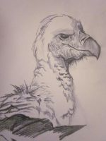 vulture by SunsetDragonfly