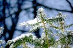 snow on branch by suuzz870