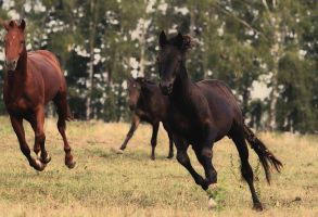 Horses game X by Lilia73