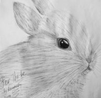 Bunny for Tho-be by Maarel