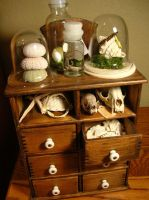 Cabinet of curiosities no. 6 by modastrid