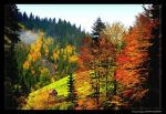 Autumn colors by Musculobog