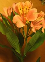 Stock Tigerlilly Flower by Sheiabah-Stock