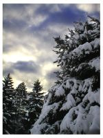 Snowy Trees by Choucism