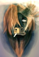 The Shaggy Cow by leoslim