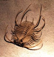 Pleurexanthemus Trilobite by Mountaineer47