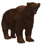 Brown Bear 02 PNG Stock by Roys-Art
