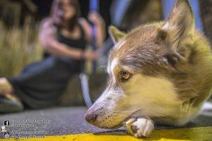 Husky Westgate On Sea 2013.09.07 by atmp