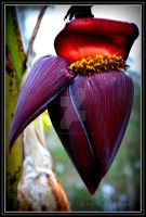Banana flowers and fruit by DesignKReations