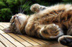 Cat belly by angelapin