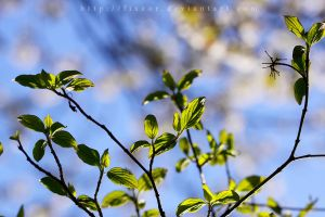 Baby leaves by Fixzor