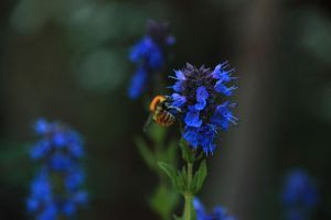 Busy Bee by skypho