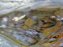 Leaf in Water by sophierevell