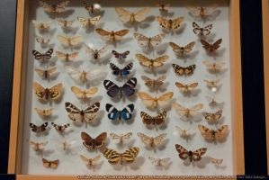 Butterflies : 16 by taeliac-stock