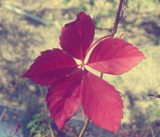 Faded red leaf by Laura-in-china