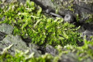 Moss by Frog-studios