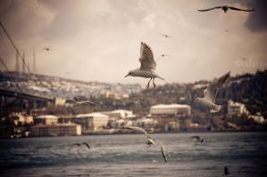 Istanbul I by tulutass