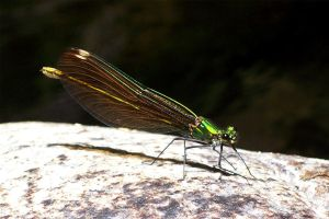 Green Damselfly Machine by KurtzGB