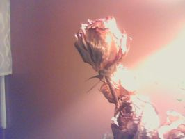 Dried Roses 2 by mrslovettrules