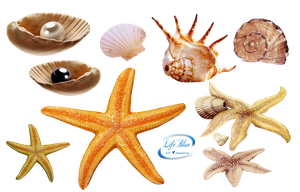 Sea creatures - PNG by lifeblue