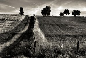 The path in black and white by LiveInPix
