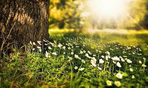 Spring 2016 by montag451
