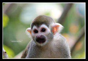 Squirrel monkey portrait by declaudi