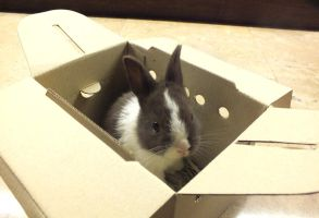 Bun in a Box by iAlly