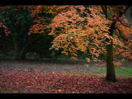 Autumn Silence by GMCPhotographics