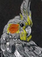 Grey Cockatiel ACEO by The-GoblinQueen