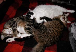 Three cats on my bed by edwardvb