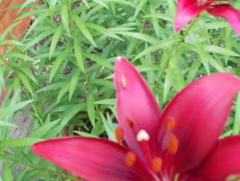 Can you see the little green bug on the petal? by TrulyMadIrresistible