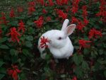 Bunny in the flowers by PeichenPhilip