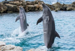 Dolphins... by ssabbath