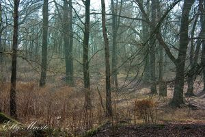A Forest - VII by 666gothika666