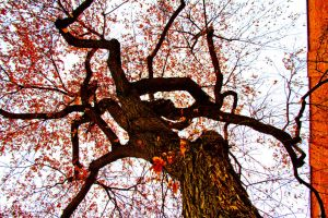 reach for the sky by blackbelly