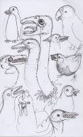 birds with teeth by Sardonicism
