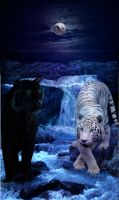 Yin Yang Tigers by 4EverIsntLongEnough