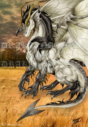 Black And White Dragon Pics. Color: white/lack. Des/Pic: