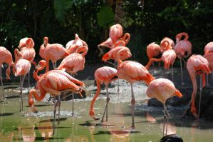 Flamingos by JBlue2389