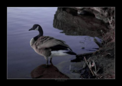 Mother Goose by jon