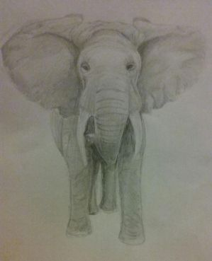Elephant - front facing by ThisbyWaters