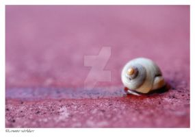Snail trail by alwaysdaydreaming