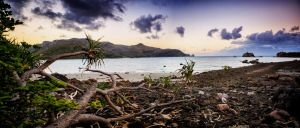 The Pandanus Coast by Questavia